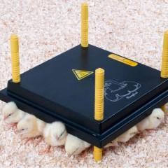 kippen houden-comfort-warmteplaat-25-240x240