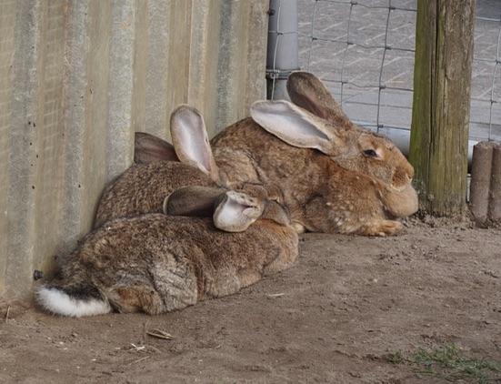 konijnen-boerd