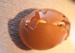 Eieren pikken gedrag kippen
